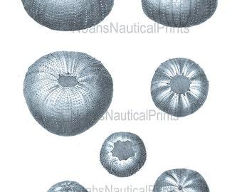 Sea Urchins Print. Blue Sea Urchins Giclee Print. Coastal Home & Living Decor. Beach Style Blue Bathroom Wall Decor