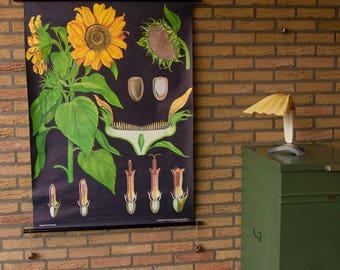 Pull down School Chart  Sunflower  Jung Koch Quentell