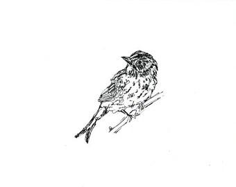 Skizzenbuch Verkauf - Vogel #17 Original Tuschezeichnung - 8 x 10 Songbird Original-Kunst