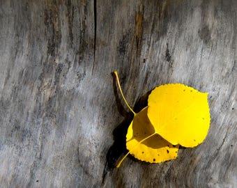 Fall photo, aspen leaves art, Colorado art, cabin decor, rustic home decor, aspen tree decor, log home art, landscape horizontal photo | Two