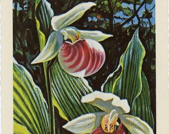 Minnesota State Flower - Showy Lady's Slipper Vintage Postcard Signed Artist Ken Haag (unused)