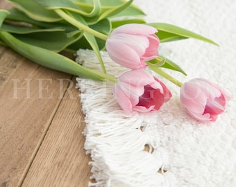 Pink tulips stock photography | Square stock image - Natural stock photo - Flower stock photo - Pink stock image - Spring stock photo