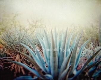 Green Cactus Photo Desert Pictures Cactus Photography Cactus Wall Art cactus pictures desert landscape art desert photography Cacti print