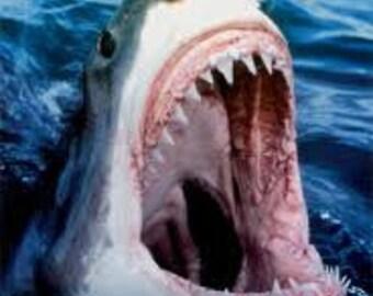 "Modern Great White shark tooth pendant. 7/8"""