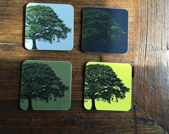 Coaster Oak Tree