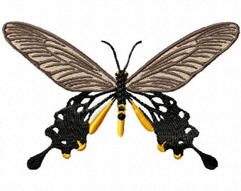 common clubtail butterfly  203