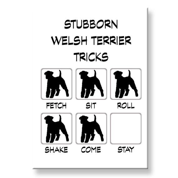 Welsh Terrier Stubborn Tricks Fridge Magnet