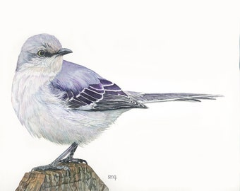 "Northern Mockingbird Print 8 x 10 of watercolor painting 8"" by 10"""