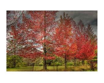 Autumn In Australia, Photography, Serene, Peaceful, Home Decor, Wall Art 15X10 Photograph