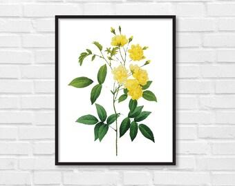Floral Print / Botanical Print / Floral Clipart / Vintage Flower Illustration Print / DIY / Roses Print / Floral Print / Art Print [30]
