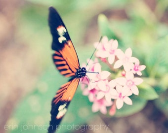 nursery art, butterfly photography, orange home decor, pink home decor, nature photography, pink flower