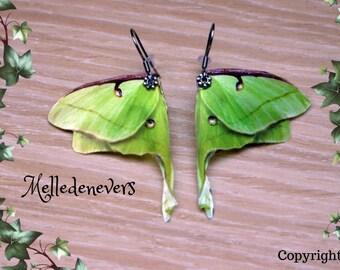 boucles d'oreilles ailes papillon actias luna acier chirurgical