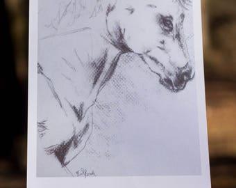 Horse Portrait in Graphite