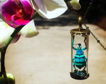 Real Beetle Jewelry Beetlejuice Real insect jewelry Scarab Bug necklace Terrarium jewelry Insect necklace Glass terrarium necklace