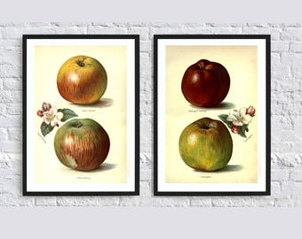 Apple print fruit print wall art print wall art decor kitchen print decor botanical illustrations vintage painting print poster set of 2 red