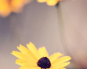flower photography yellow home decor blackeyed susan nature photography wall art Blackeyed Susan