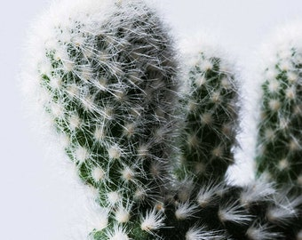 Cactus Contrast, Photography, Wall Art, Nature, Digital Print, Cactus, Home Decor, Gift, MonologuePrints