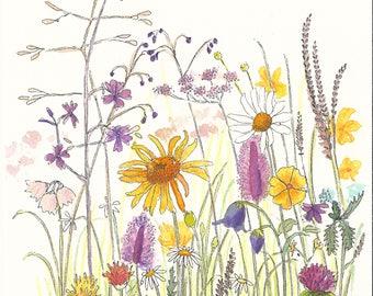Original illustration - wildflowers