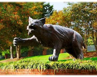 Davidson College Wildcat Statue