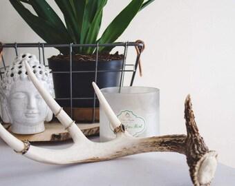 Deer Antler Jewelry Holder | Decor