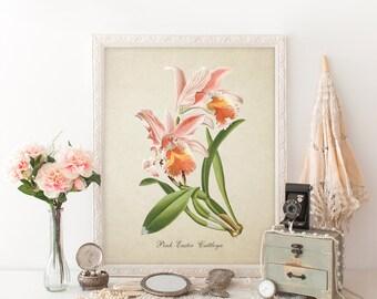 Botanical Print, Cattleya Orchid Print, Flower Art Print, Pink Orchids Home Decor, Natural History Art, Colorful Cattleya Floral Art FL047