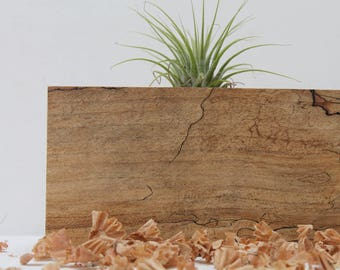 Spalted Maple Air Plant Holder  M10