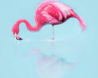 Pink Flamingo - Animo Reflecto serie