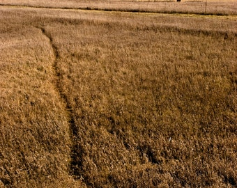 Golden Path - Landscape Photography, Nature Photography, Prairie, Country, Rural, Fall, Autumn, Harvest, Fine Art Print