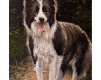 Border Collie Dog Portrait by award winning artist JOHN SILVER. Personally signed A4 or A3 size Print. BC002SP