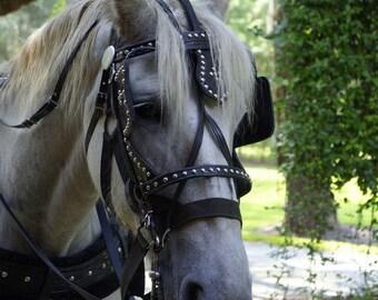 Jekyll Horse Photographic Print