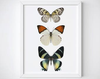 Butterfly Wall Art, Butterfly Print, Butterfly Poster, Spring Wall Art, Butterfly Wall Decor, Insect Wall Art, Butterfly Art Print