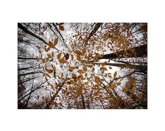 Autumn Tree Tops - PRINT