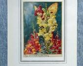 Snapdragon Flower Fairy V...