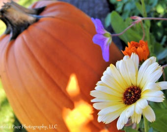 Blank Greeting Card: Floral Pumpkin