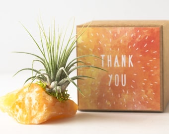 Crystal Thank You Gift, Employee Appreciation Gift, Office Gift, Yellow Calcite Crystal Air Plant, Boss Gift Coworker Gift Idea Teacher Gift
