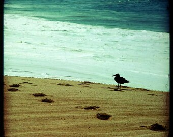 SALE: summer beach photography ocean waves calm beach footprints in the sand Mexico travel photography seabird dreamy seascape 8x8 print