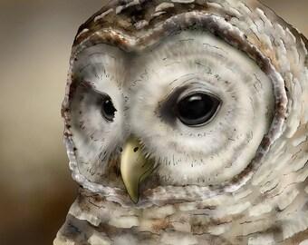 Barred Owl 2 - 9x12 signed fine art print; Barred owl, owls, owl prints, bird prints, bird lover,