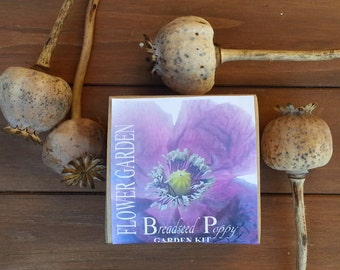 Dried poppies etsy purple breadseed poppy garden kit annual flower that grows dried poppy pods for fall wreaths and decor mightylinksfo