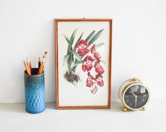 Orchid picture framed,vintage orchid drawing, botanical print, framed flower drawing, flower Print, framed drawing