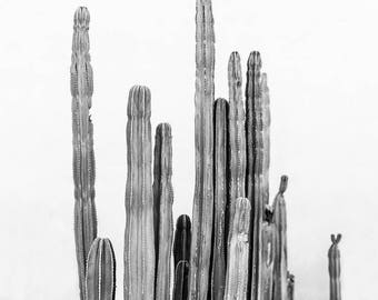 Black and White Cactus Print, Monochromatic, Palm Springs Photography, Mid Century Modern, Desert Decor, Black and White Wall Art