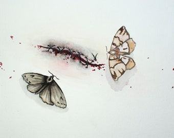 Healing Moths