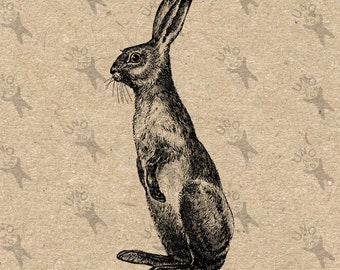 Vintage image Hare Rabbit Instant Download Digital printable clipart graphic - scrapbooking,decoupage,burlap,kraft, mail art etc HQ 300dpi