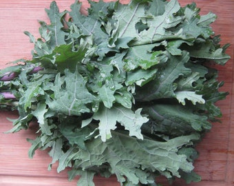 Organic Red Russian Kale Heirloom Vegetable Seeds