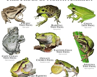Treefrogs of North America