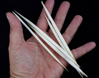 "Multipack THICK 4-6"" WHITE Porcupine Quills Needles for quillwork, art projects, costumes,etc"