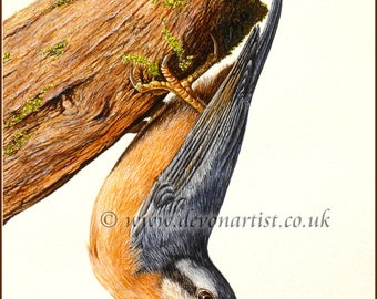 Original Watercolour Painting, Nuthatch, Wildlife Painting, Realistic Bird Art, Watercolor Birds, Birdwatcher, Fine Art Painting