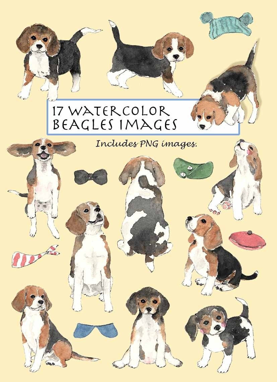 CLIP ART Watercolor Beagles Set. 17 Images. Digital Download.
