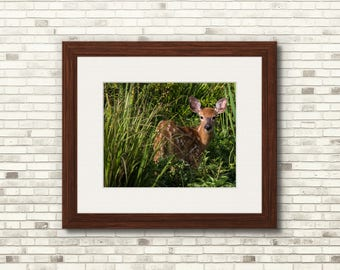 Fawn In Grass | Nature Print | 11x14 - FREE SHIPPING!
