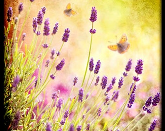 Nature photography, Lavender, Flowers, Butterflies, Summer, Garden, Shabby Chic