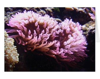Sea Anemone Note Card